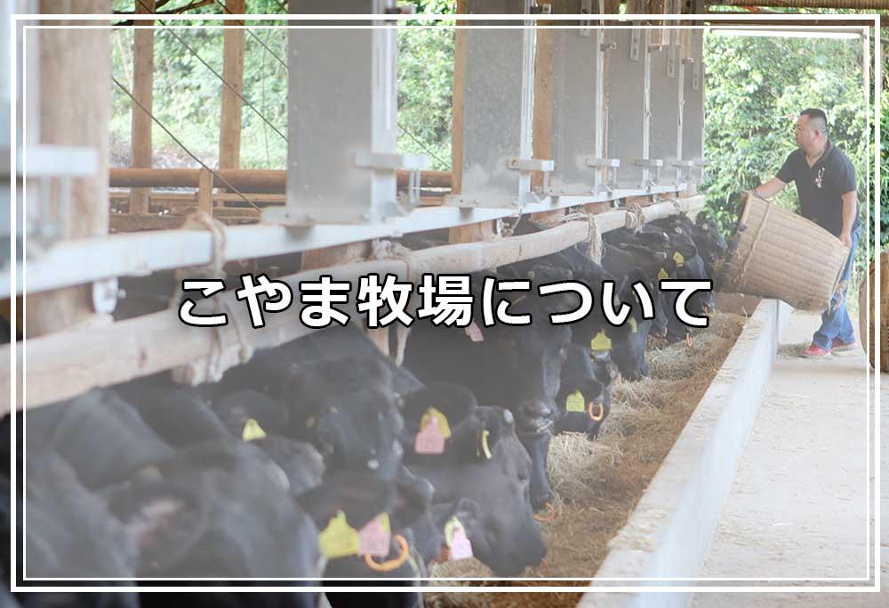壱岐牛 牝牛専門肥育農家 こやま牧場について