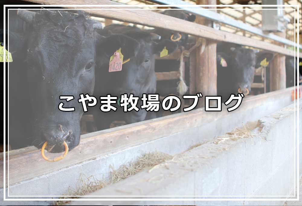 黒毛和牛 長崎和牛 壱岐牛 こやま牧場ブログ