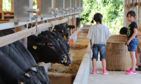 子ども達も牛の餌やりのお手伝いします