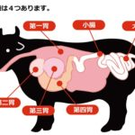 牛の胃袋は四つある