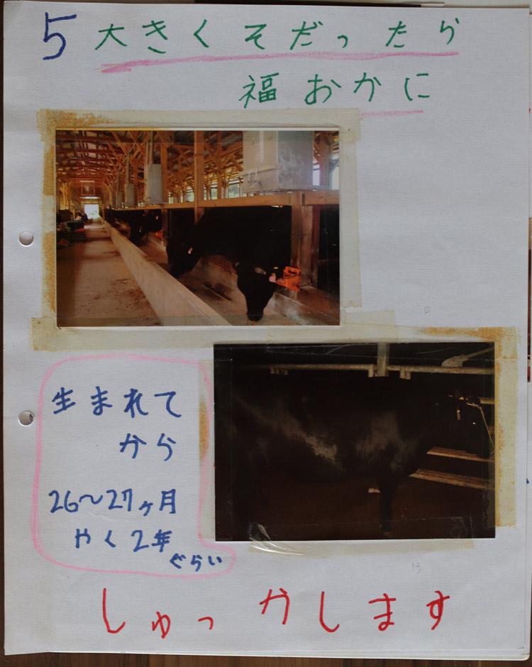 福岡に牛(壱岐牛)を出荷します。