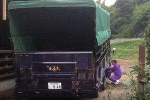 牛を運ぶトラックは特殊に加工された積載車です