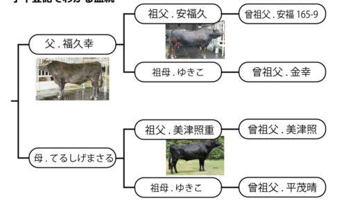 子牛登記でわかる和牛の血統