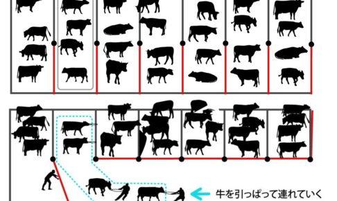 牛舎の仕組み、壱岐牛定量出荷の為に