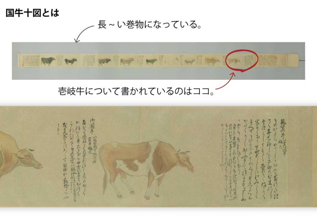 壱岐産の牛は昔から良い牛という定評がありました