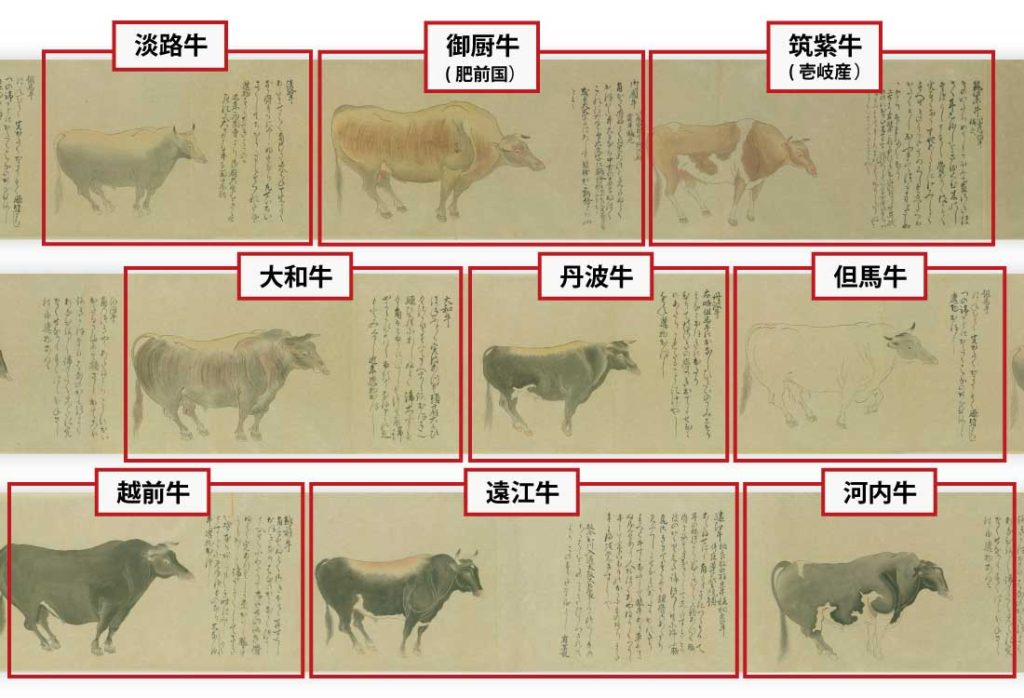 和牛について、鎌倉時代からの牛の産地