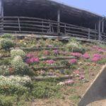 牧場の花壇